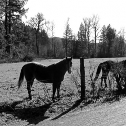 horse-photo-camp-creek-lane-county-oregon