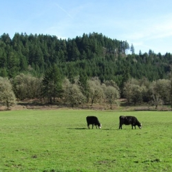 pasture-photo-camp-creek-lane-county-oregon