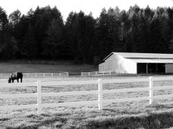 pasture-photo-donna-road-lane-county-oregon