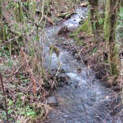 kelly-creek-la-lone-road-lane-county-oregon