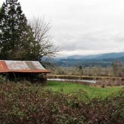 old-barn-photo-tree-farm-road-lane-county-oregon