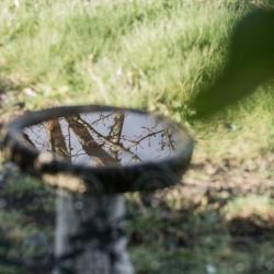 reflecting-pool-lane-county-oregon